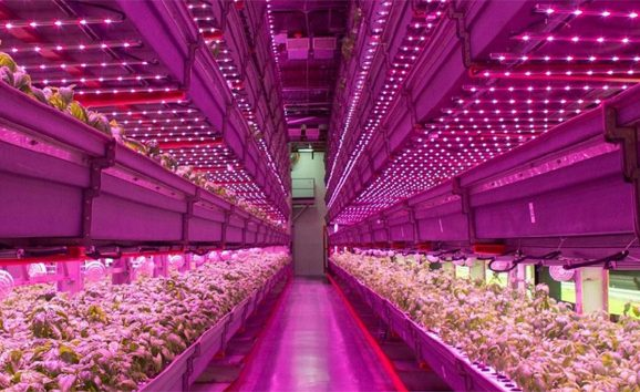 Cultivo Indoor lâmpada grow